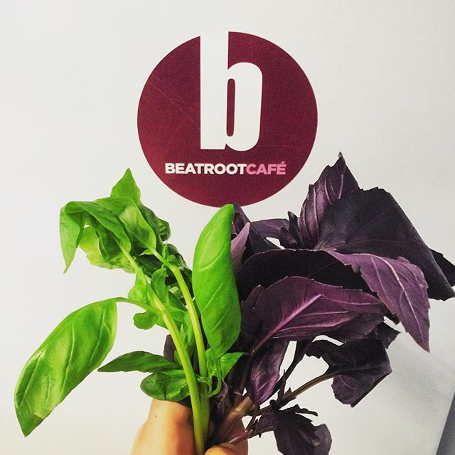 Ever seen purple basil before? #organic #naturallygrown #uk #bristol #beatroot
