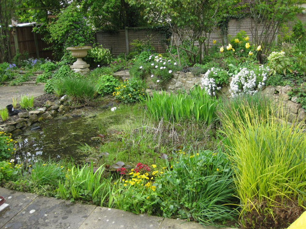 Overgrown & out of control wildlife pond