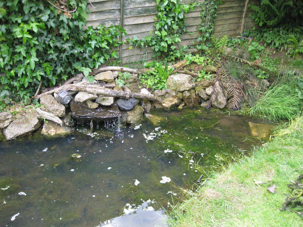 A wildlife pond that needs rethinking!