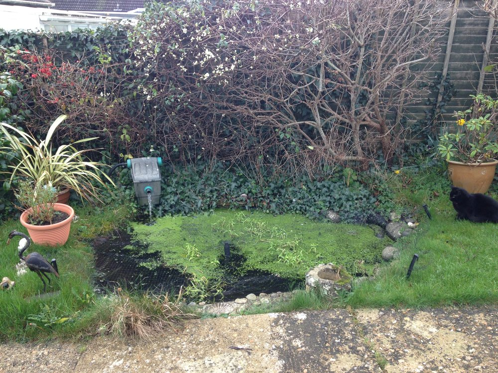 Poorly Pond in need of some attention!