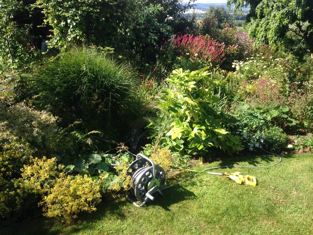 Before… - Very overgrown fish pond