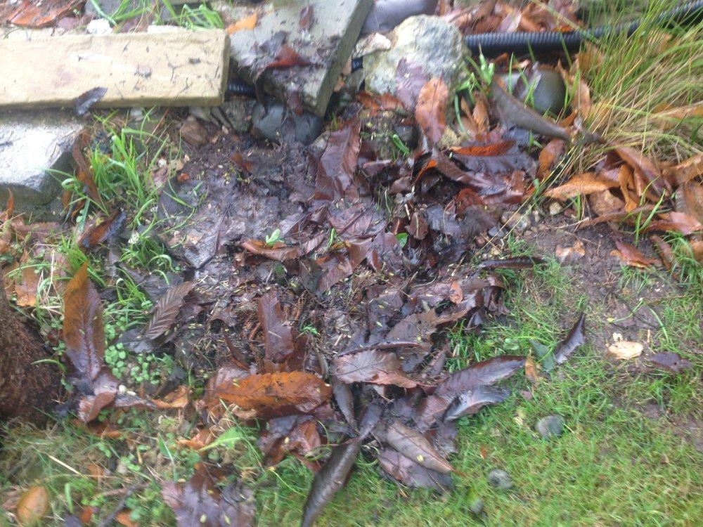 Decomposing leaves lead to algae!