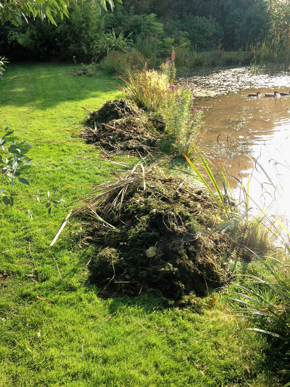 Large aquatic weed pile