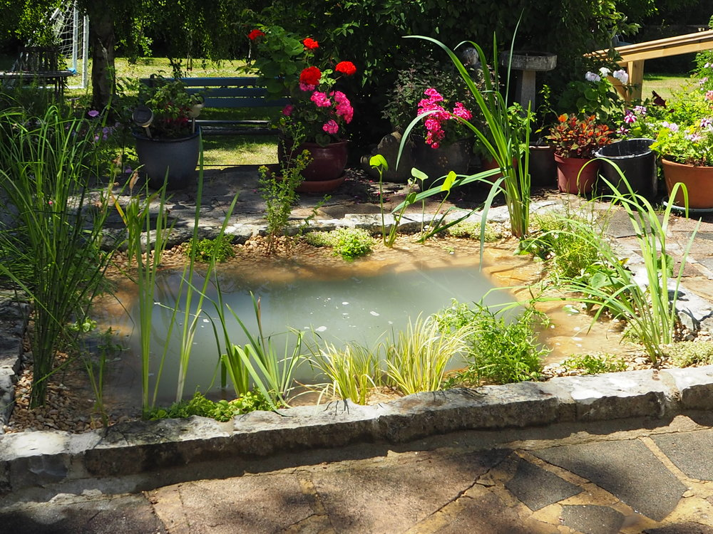 After… - A boring formal pool transformed into a still water pond full of aquatic plants