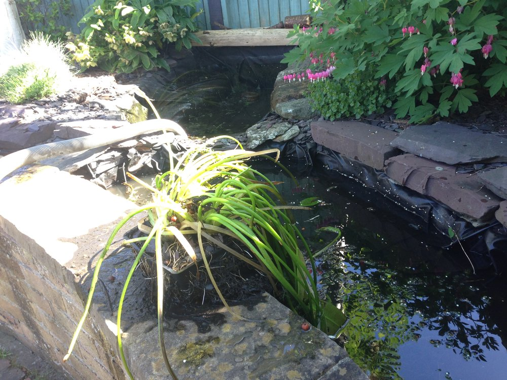 Before… - Dark and dingy poorly constructed water feature