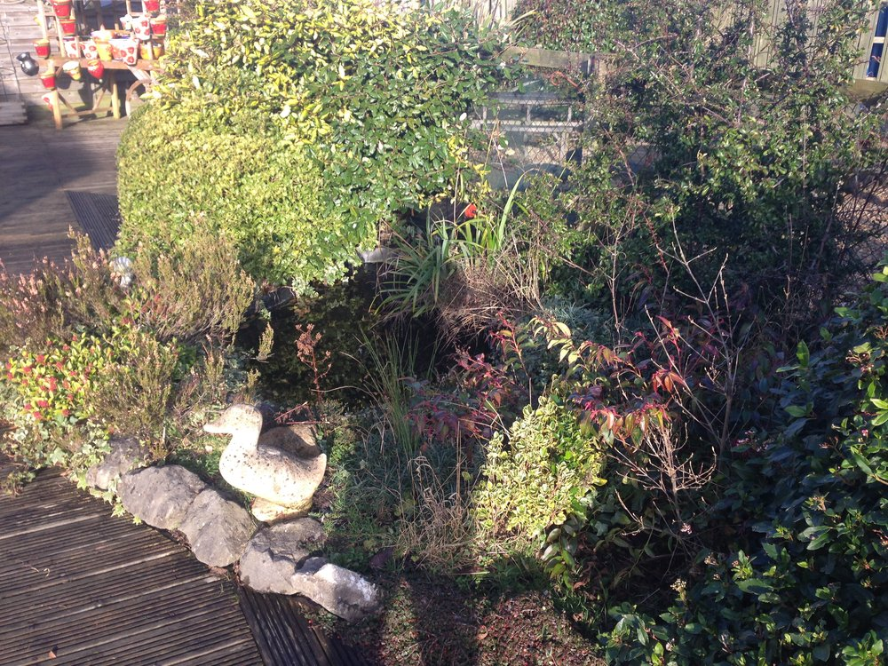Before… - There is a preformed pond somewhere in this overgrown mess