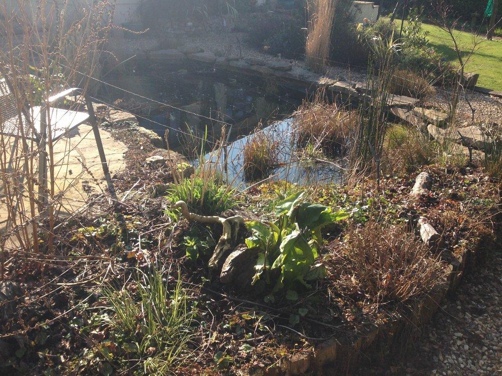 Before… - Overgrown tired looking pond & bog garden
