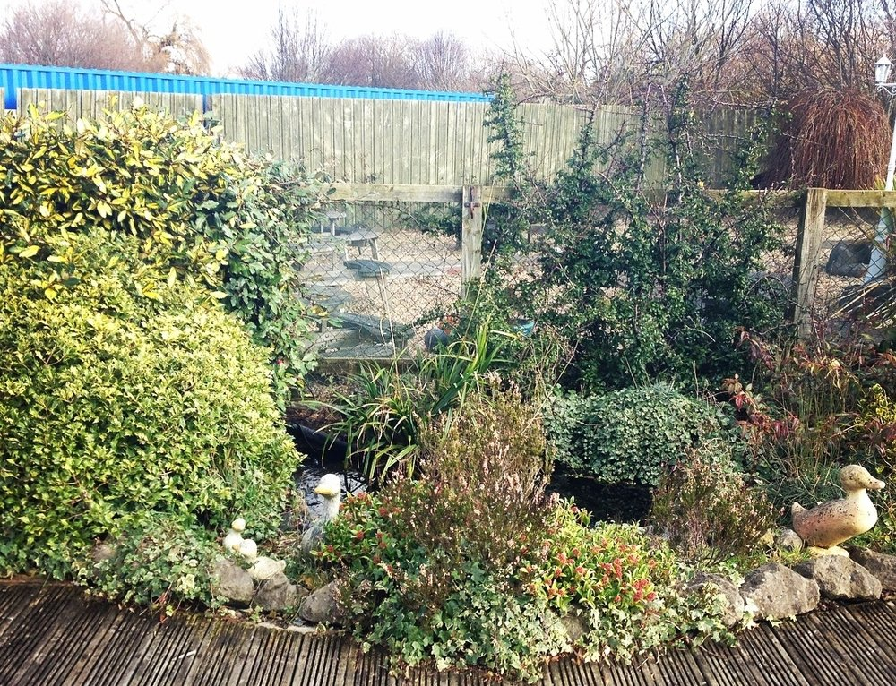 Before… - A poorly pond in need of some TLC