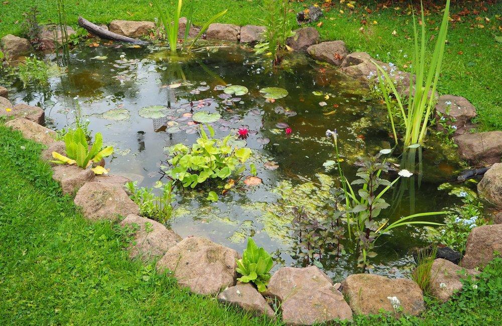 After… - Still water wildlife pond