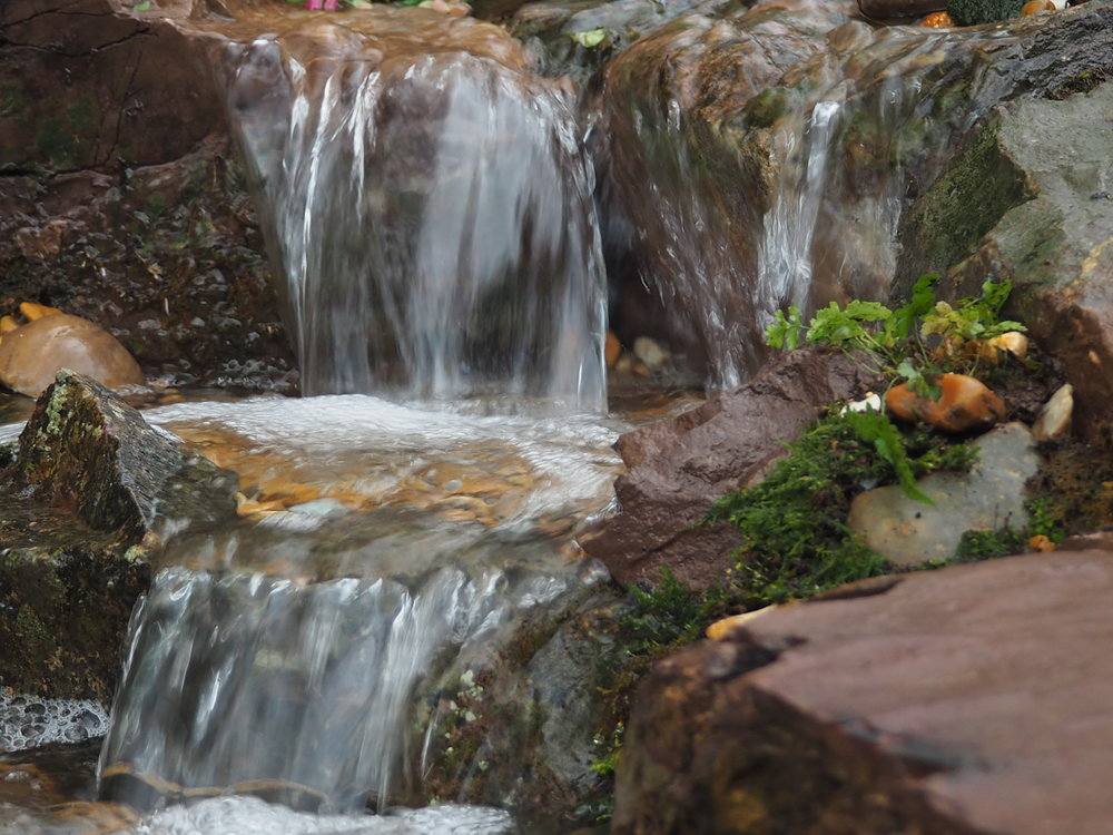 Ecosystem pond, Nether Stowey, Somerset - Ecosystem pond and cascading waterfall