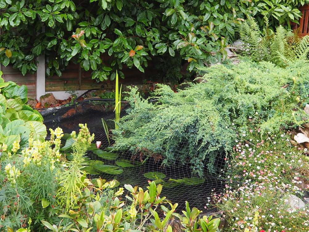 Overgrown fibreglass pond needing DU Waterscapes help!