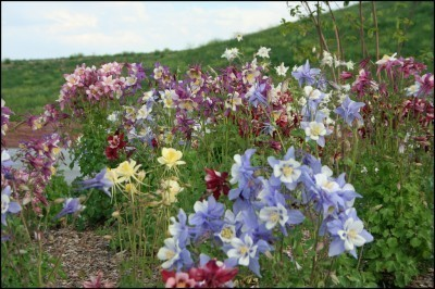 Photo Credit: Gardening Know How.  PS: This is a columbine flower - and before that word became owned by tragedy, this is largely what it meant. Thought you should look at something pretty today.