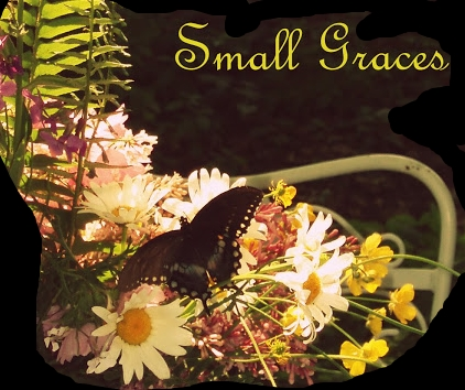 Small Graces at Forget me not Farm