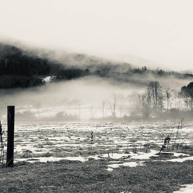 Grey and still lovely.  #upstateny #fog #winter
