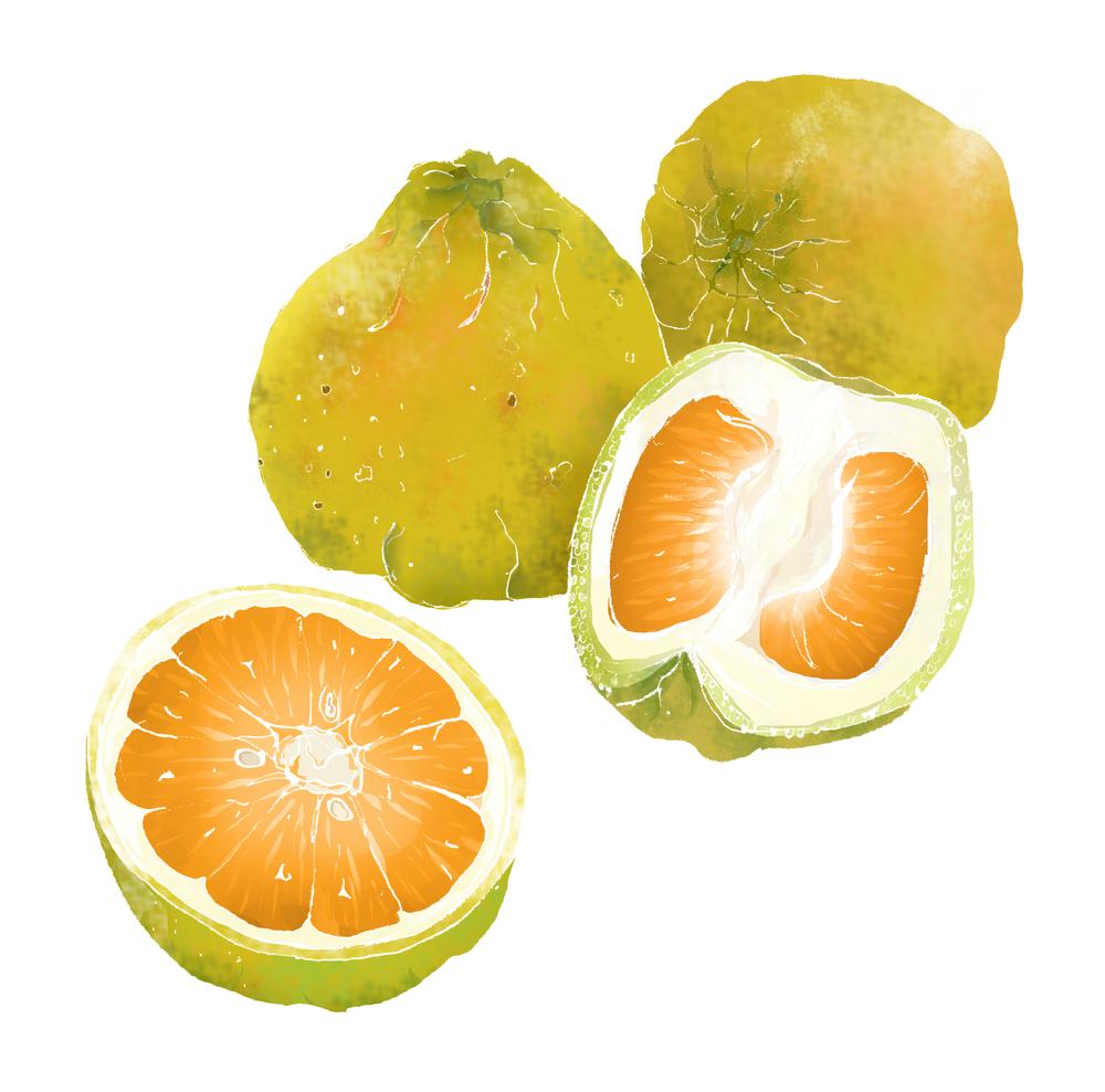U - Ugli fruit
