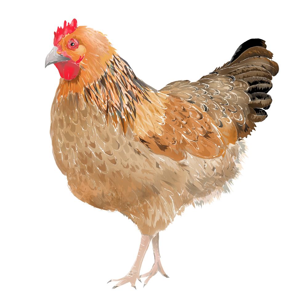 C - Chicken