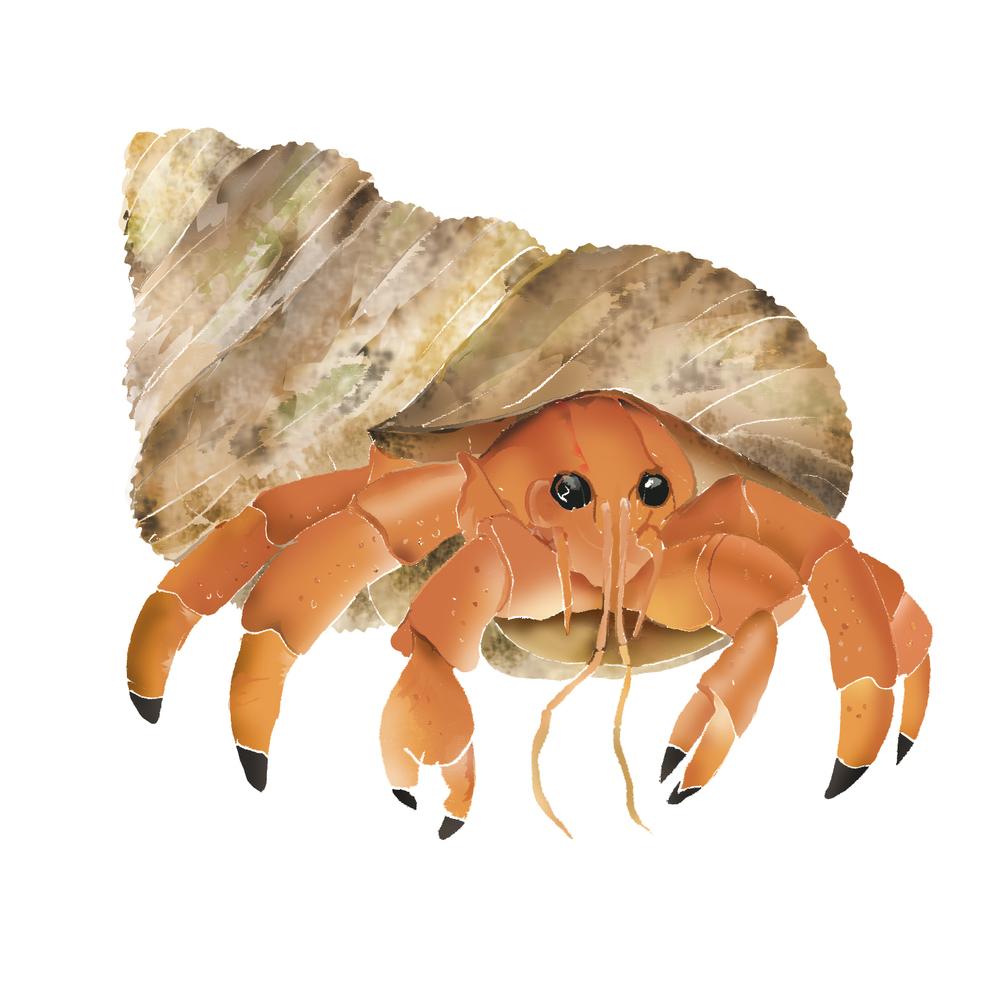 H - Hermit crab