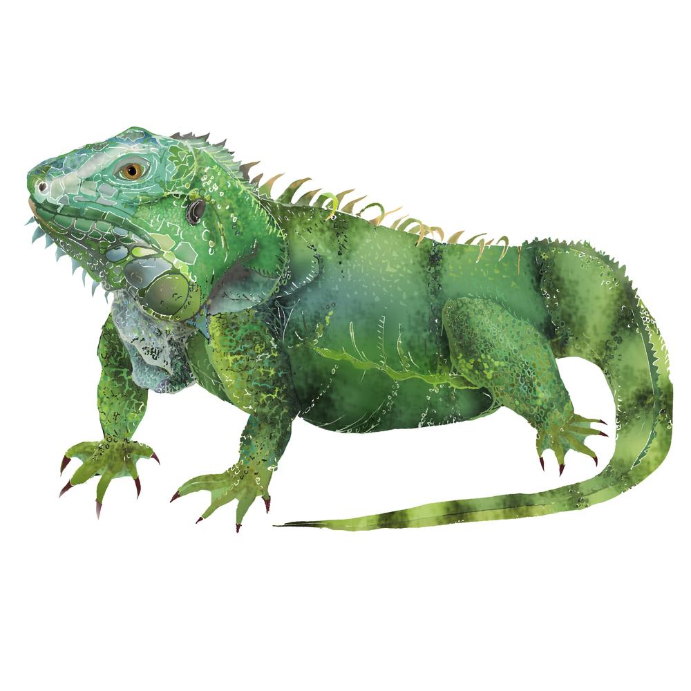 I - Iguana