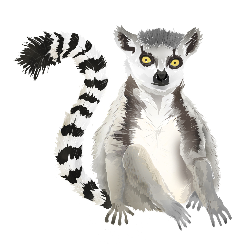 L - Lemur
