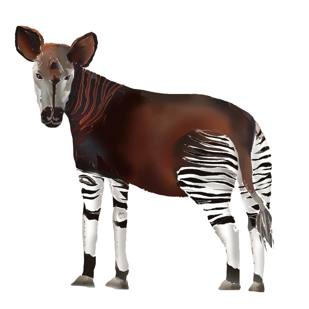 O - Okapi