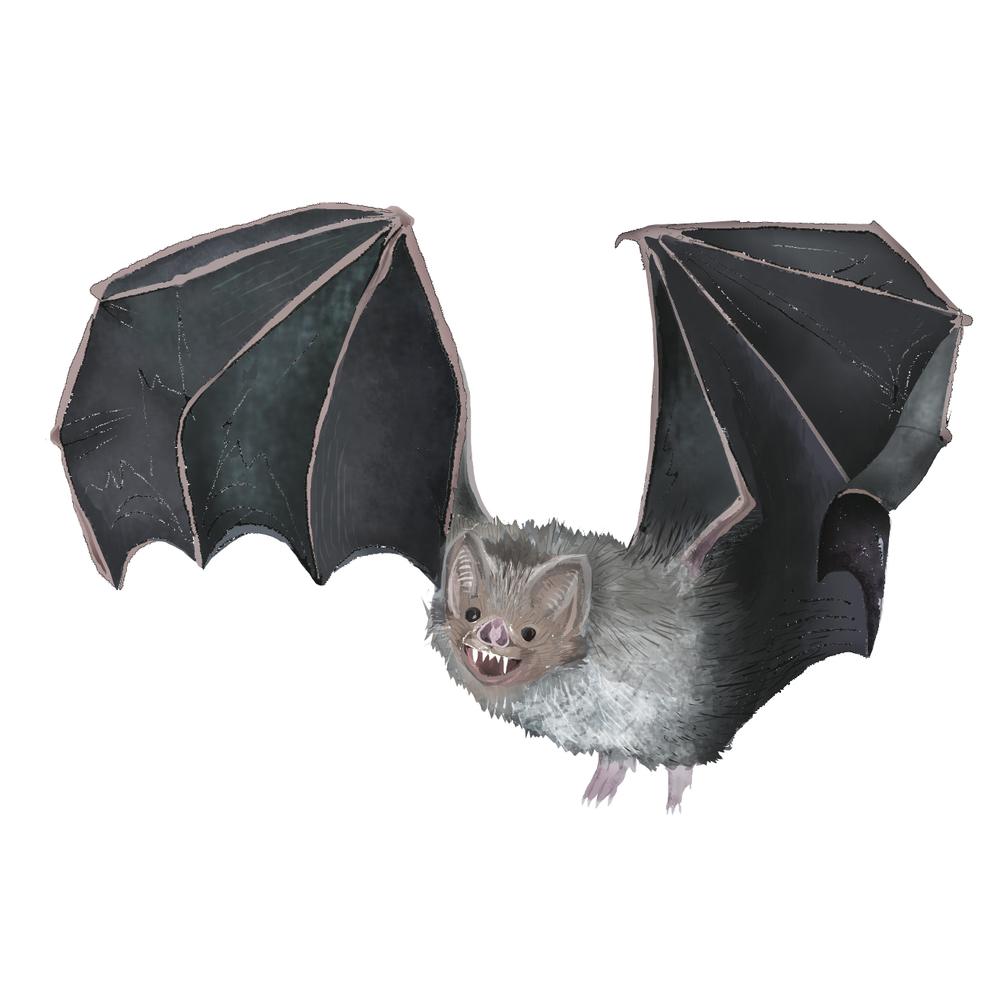 V - Vampire bat