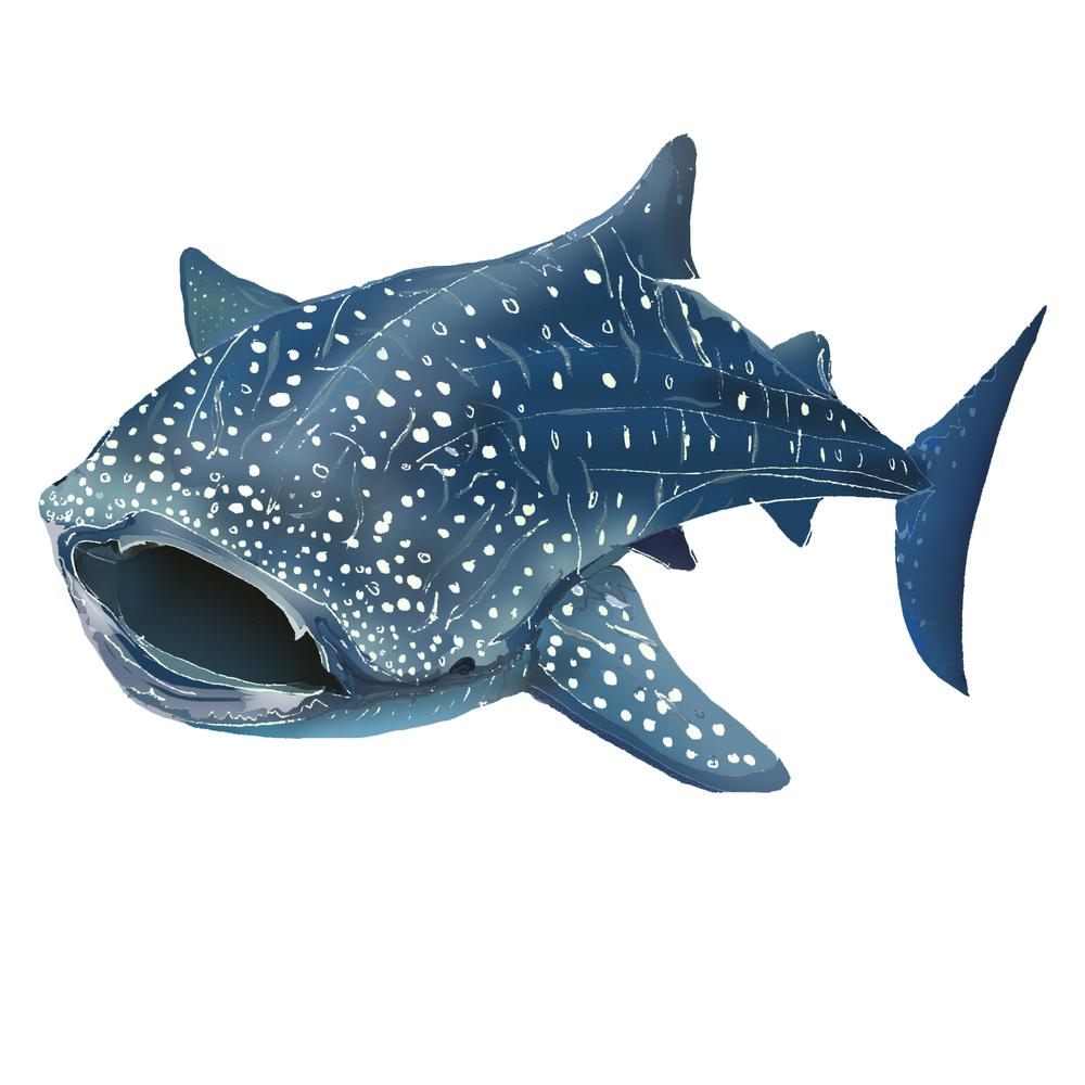 W - Whale shark