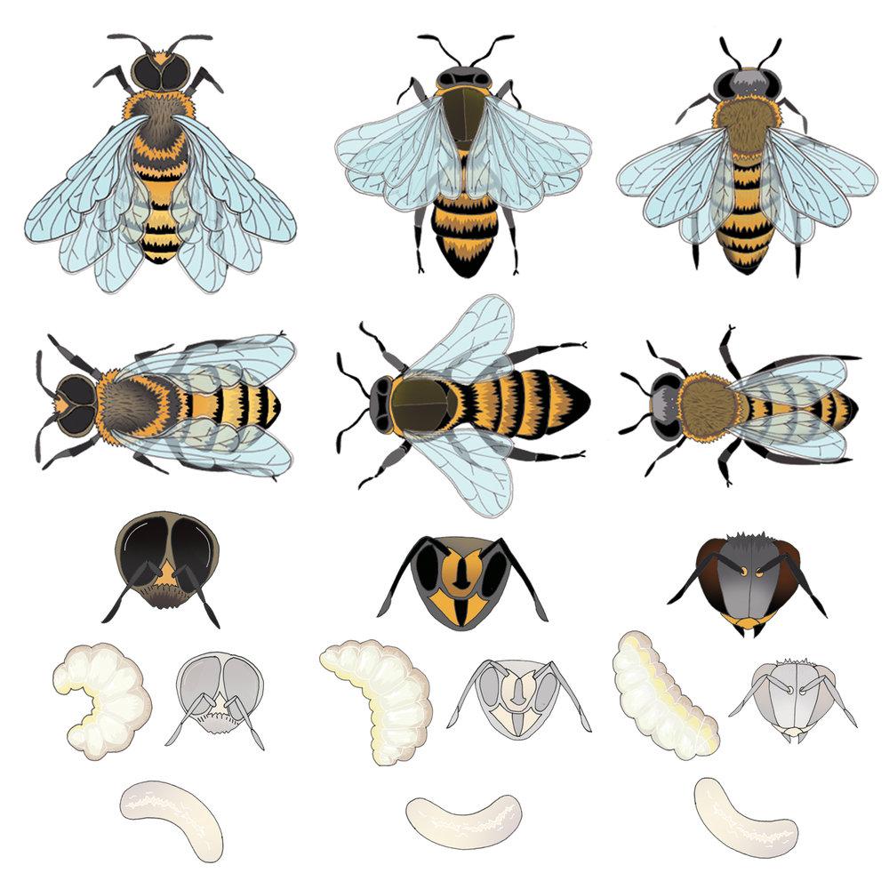 BeesFlat.jpg