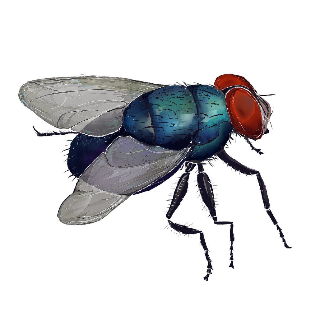 F - Fly