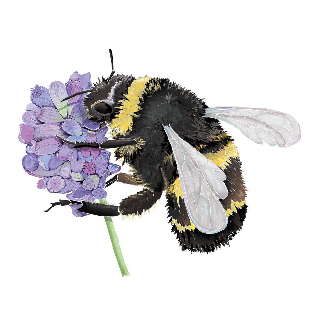 B - Bumble bee