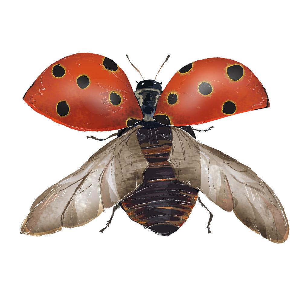 L - Ladybird