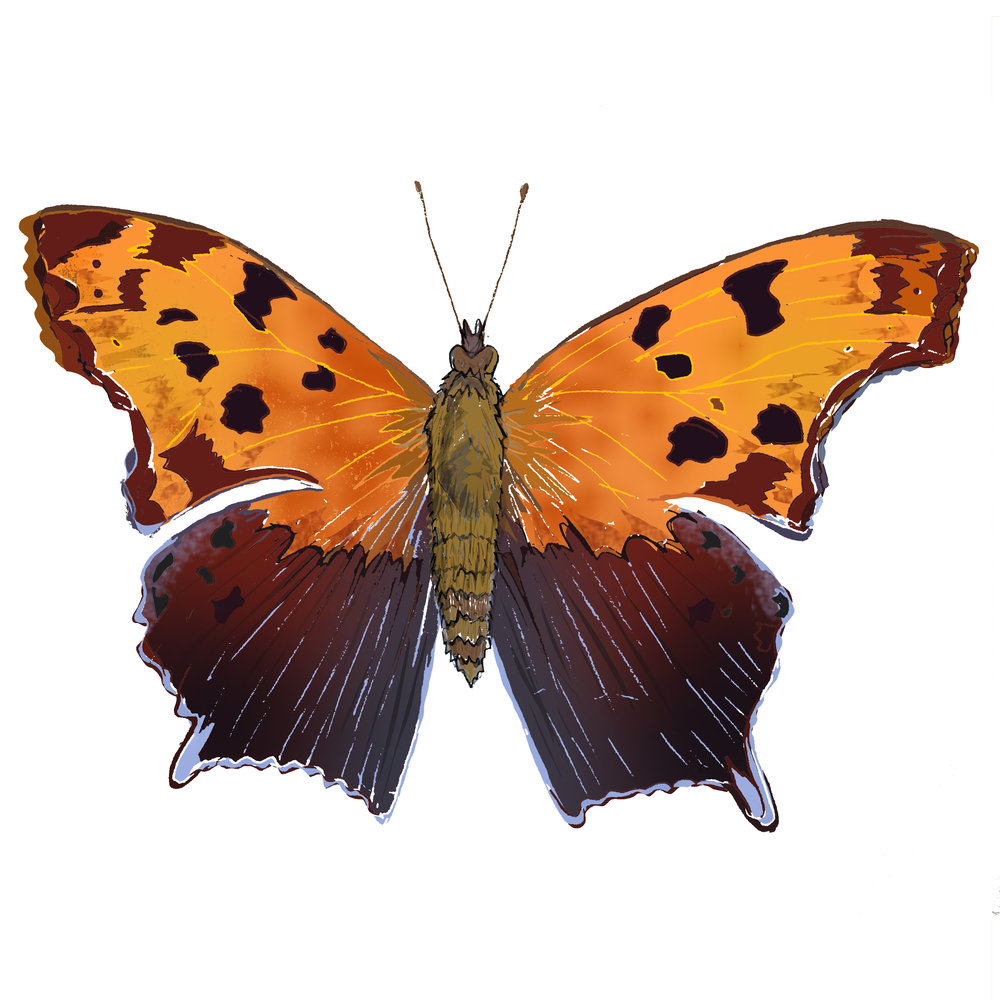 Q - Question Mark Butterfly