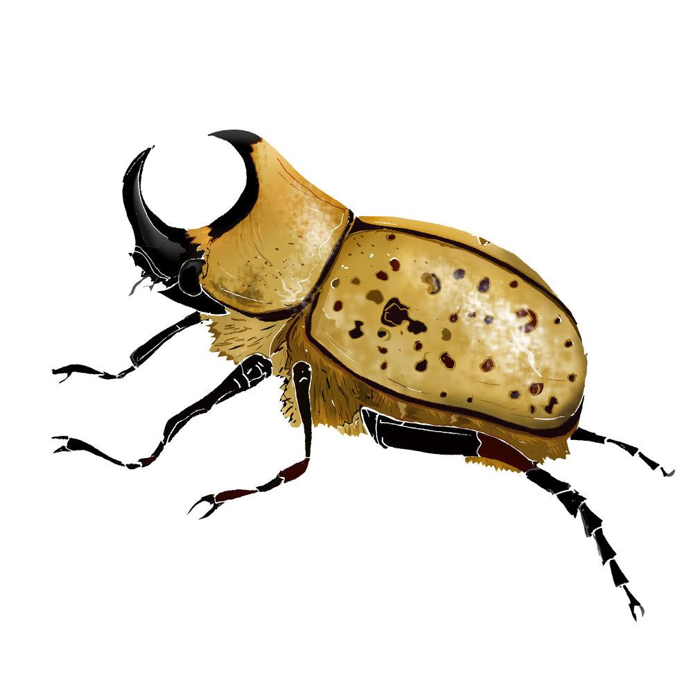 R - Rhino Beetle