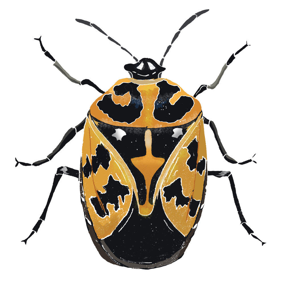 Y - Yellow harlequin bug