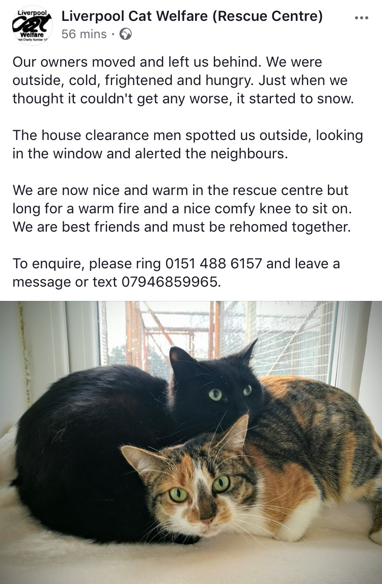 Liverpool Cat Welfare - They were rescued from the centre as kittens 20 months ago, and sadly abandoned again a few weeks ago. So happy that we can give them their forever home now!