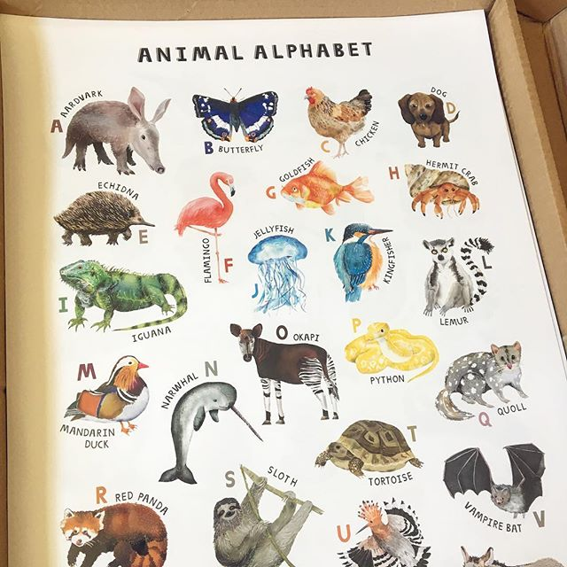 I always get excited when someone buys something from my shop...but today was super exciting as a customer all the way over in Malaysia 🇲🇾 bought one of my animal alphabet posters 🙌🏼 So nice to know they will be dotted around the world 🌍 #Etsy #etsyseller #merseyetsyteam #animalalphabet #internationalcustomer #worldwideshipping #etsyuk #animalprint #animalposter #childrensposters #az #animalaz #veganartist #veganprint #veganillustrator #animalloversofinstagram #animallover #unusualanimals #nurserydecor #kidsgifts