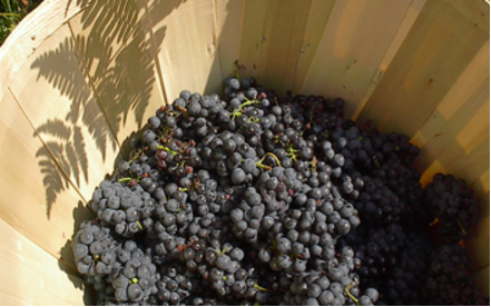 All Poocham Hill wines are made from our own grapes.