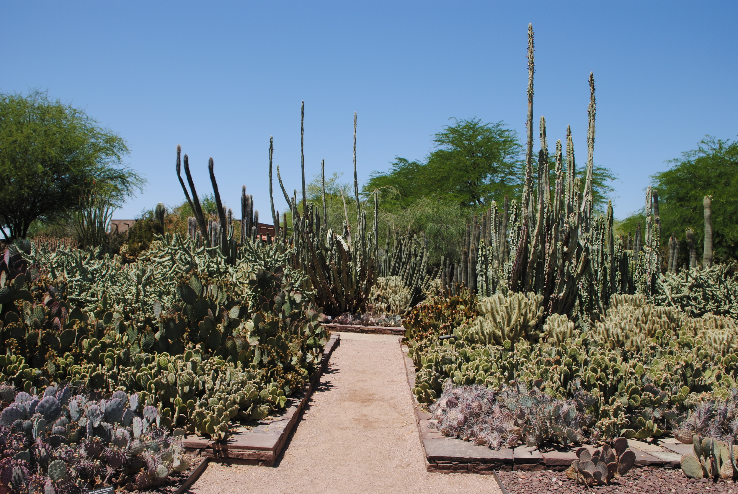 The cacti collection is worth a trek to visit.