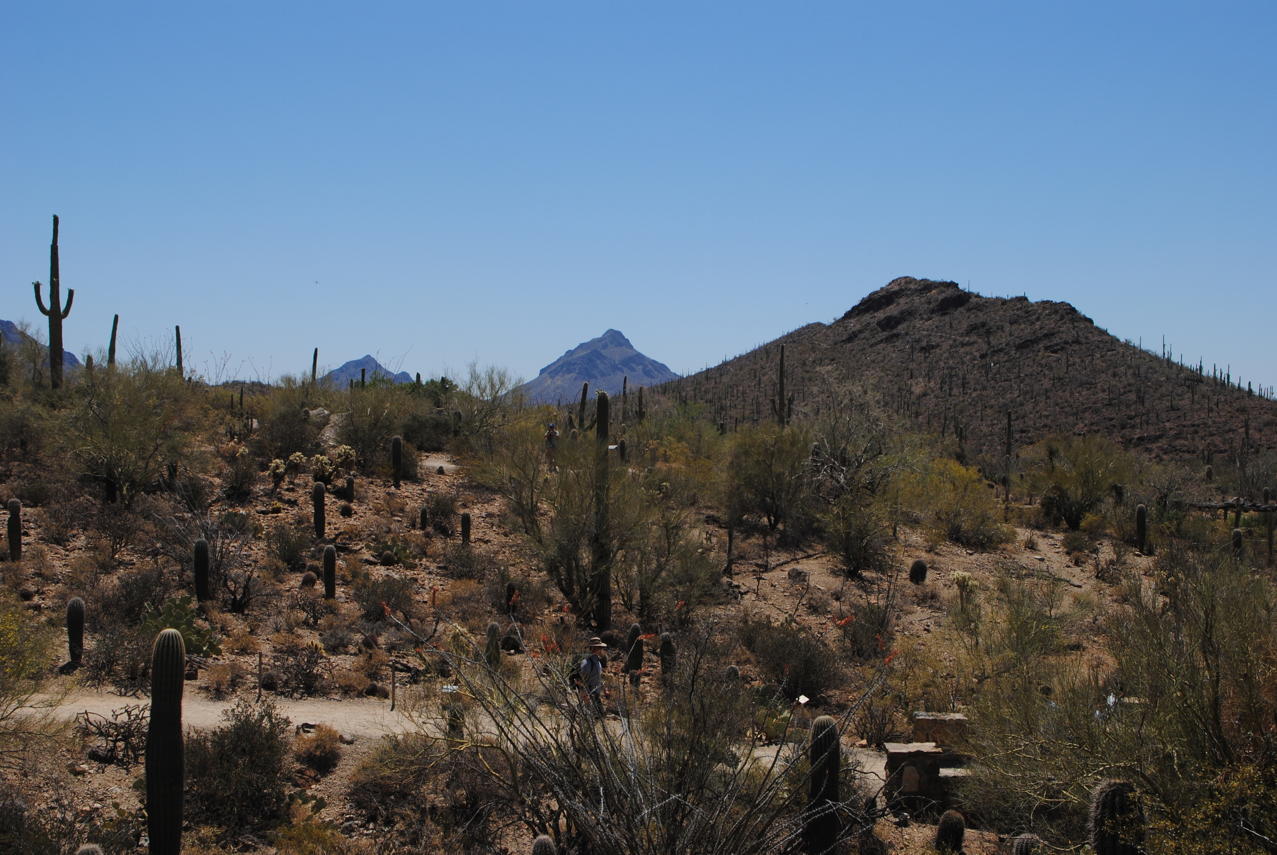 View of the grounds at the Arizona Sonoran Desert Museum