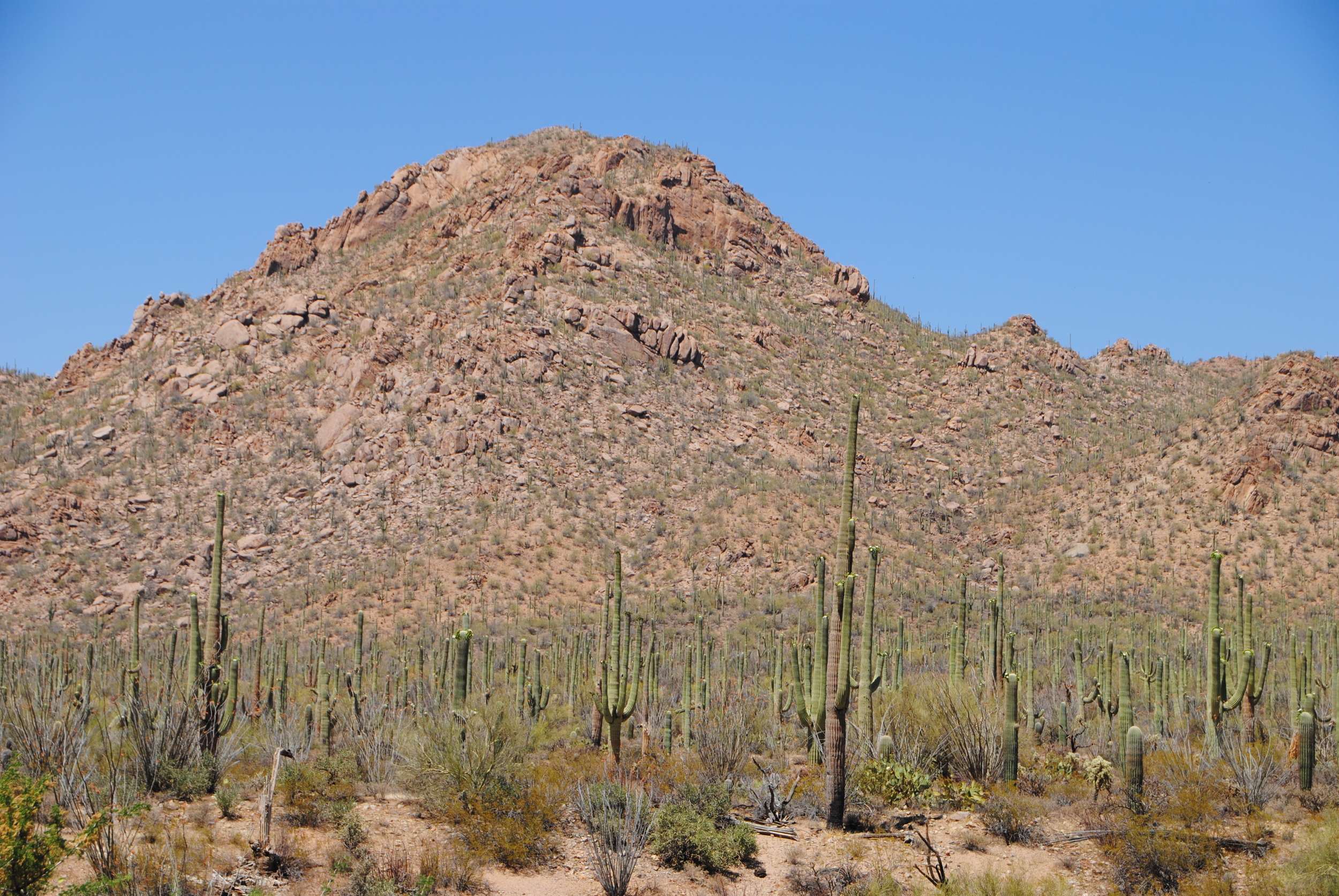 The Saguaro National Park sits on a breathtaking piece of land with expanses of its namesake and rocky buttes framing the views.