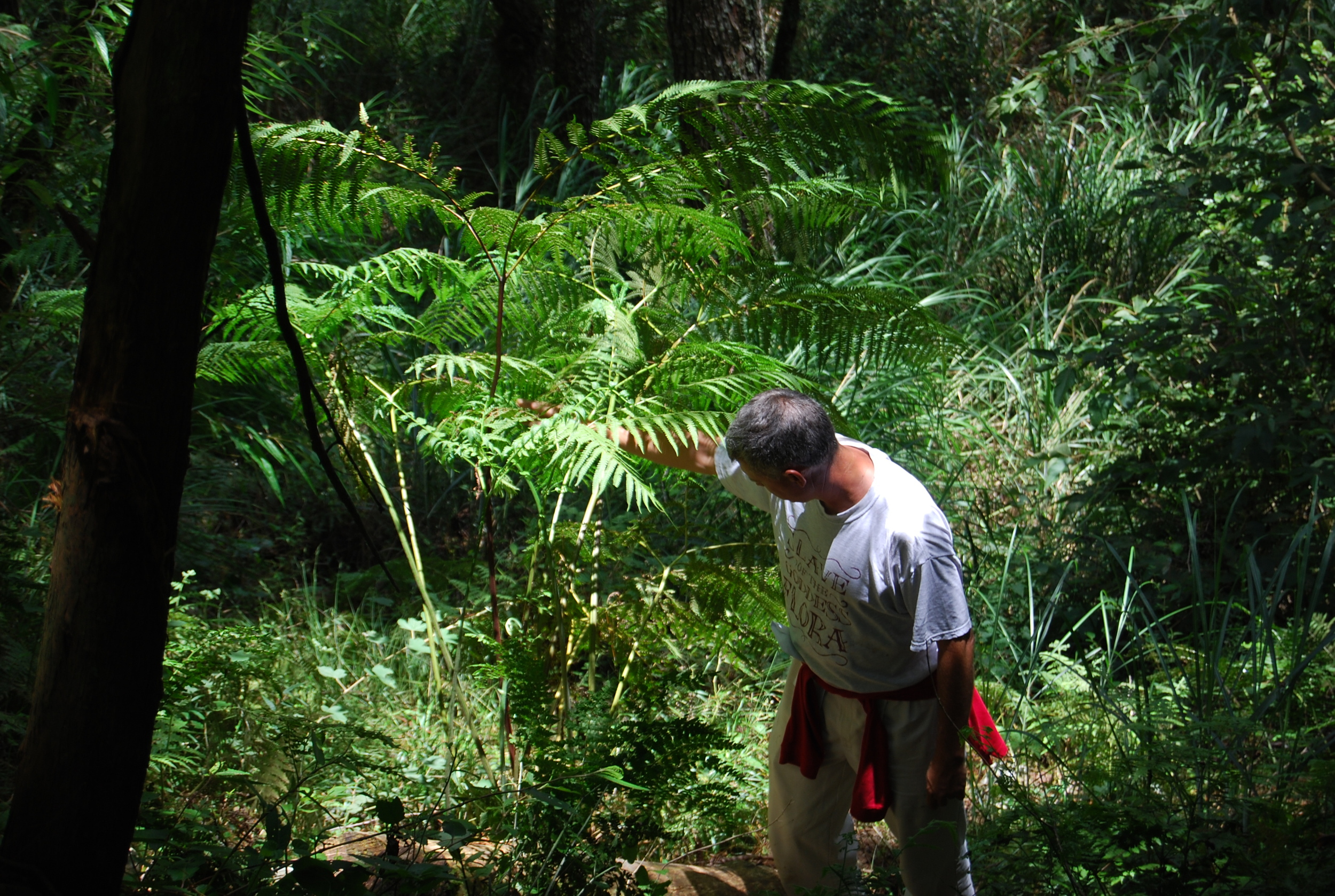 Tony Avent, modestly hiding his tears of joy as he discovers a new (to him) fern with viable spores.