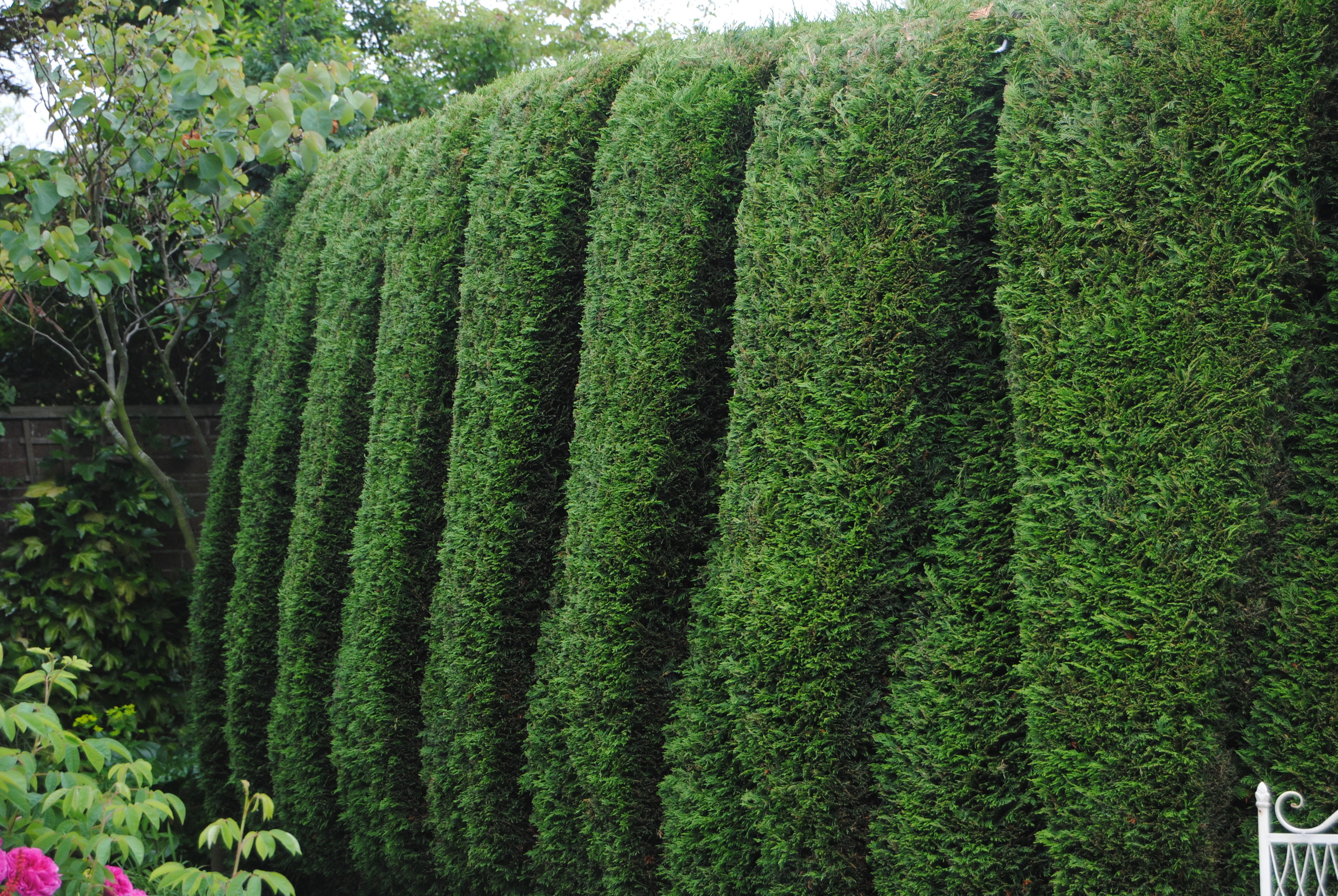 Even the hedges are delightful.