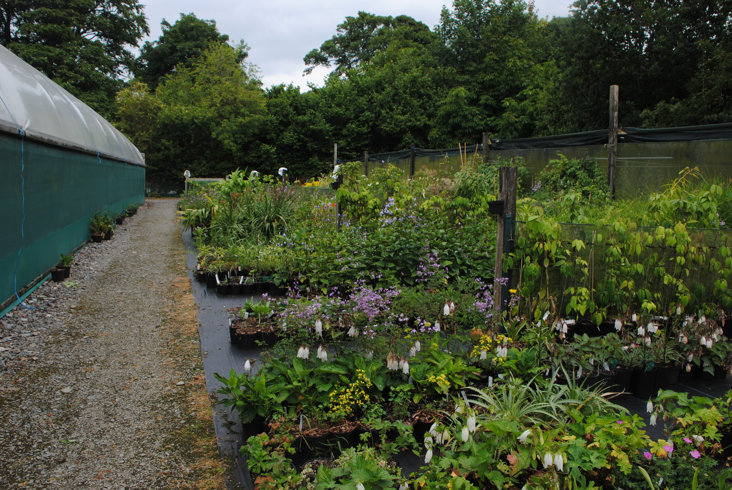 Part of the nursery where liners and herbaceous plants are grown.