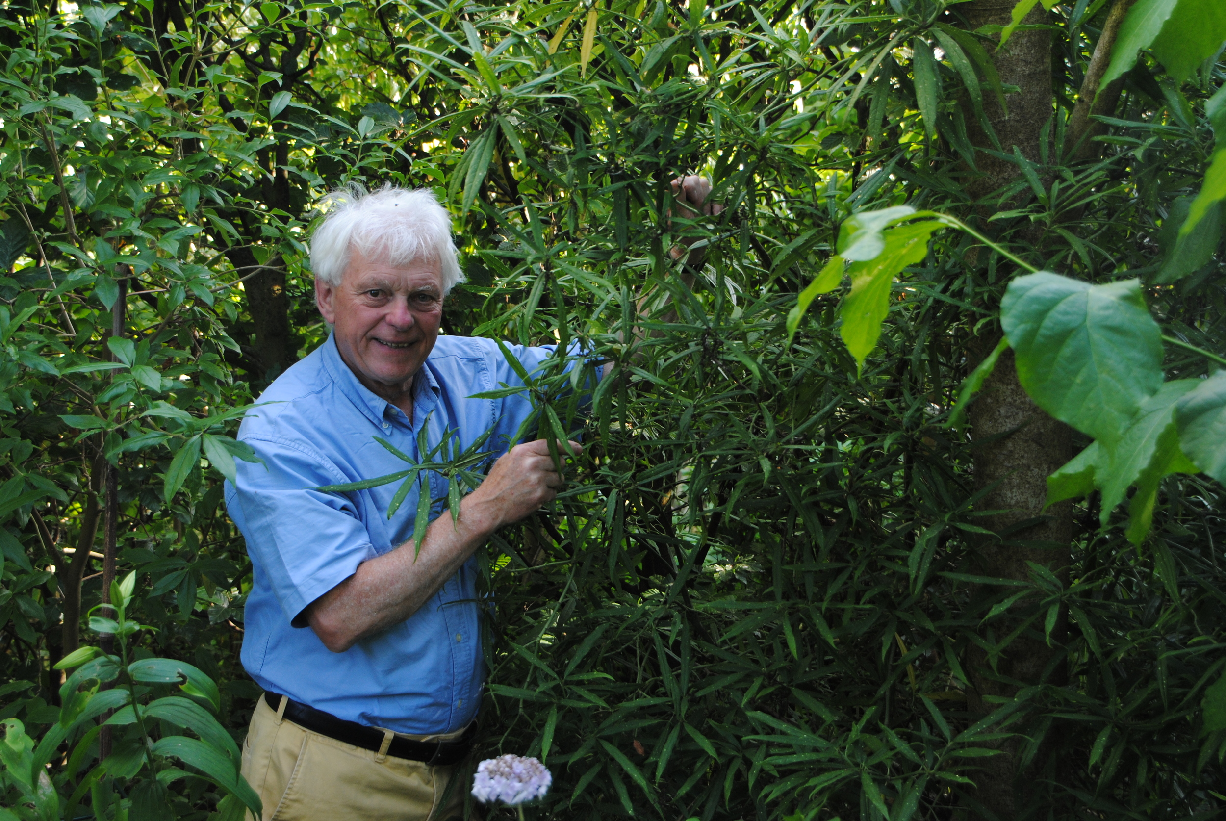 Roy Lancaster with his introduction of Aucuba himalaica var. dolichophylla.