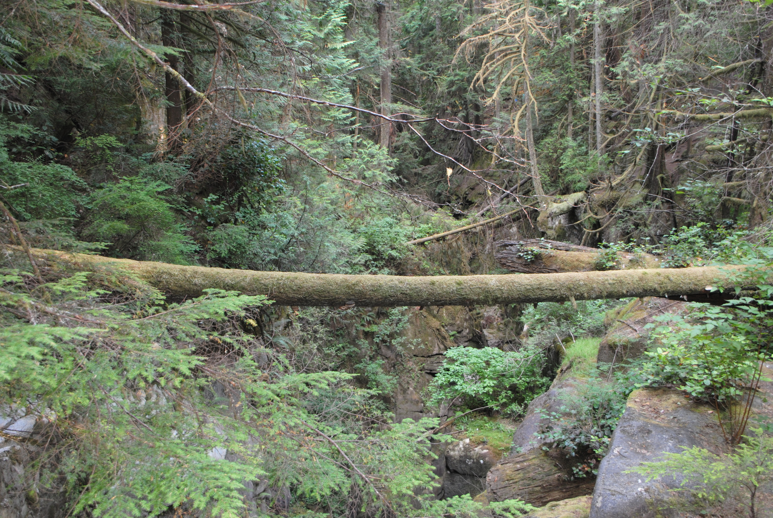Moss covered log spanning the ravine over the falls.