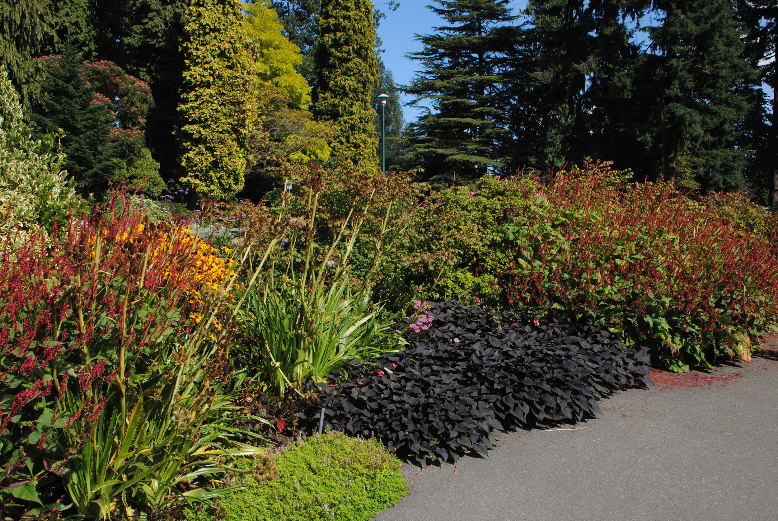 Gorgeous borders at Stanley Park.