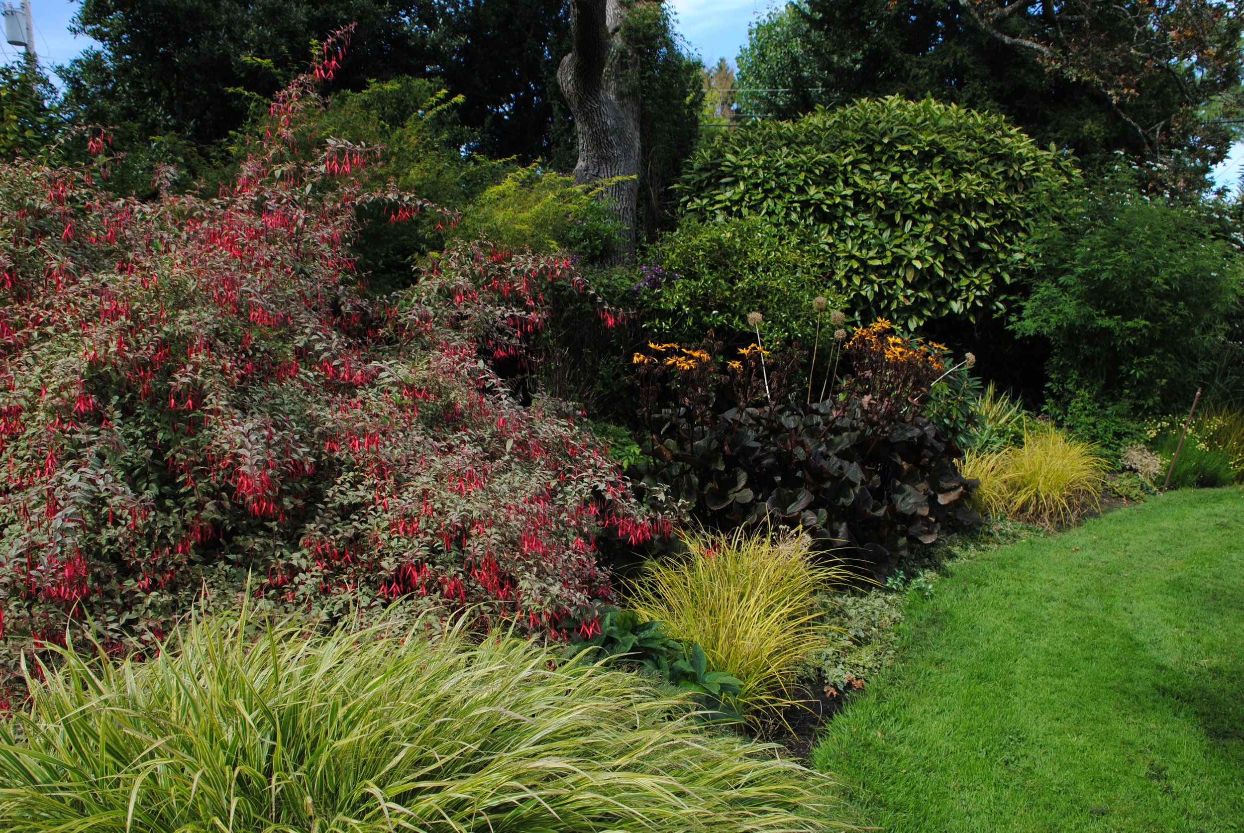 One of the lovely borders at Government House.