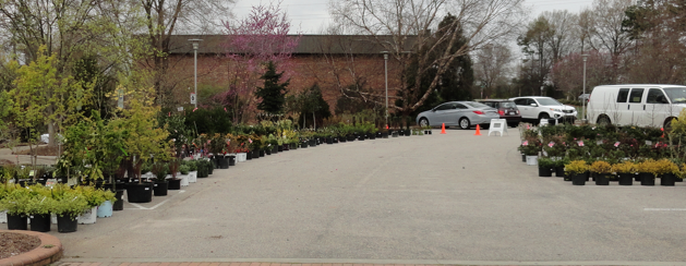 Part of the 2013 plant sale area.