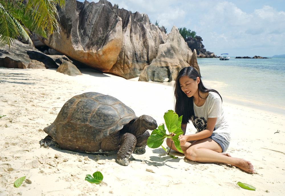 Feeding wild giant tortoise at Cousine Island, found him at the beach eating leaves fallen from the tree, and decided feed him fresh branches