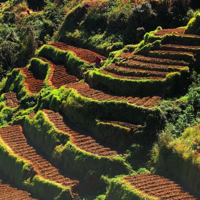 Amazing-And-Beautiful-Terrace-Farming-10.jpg