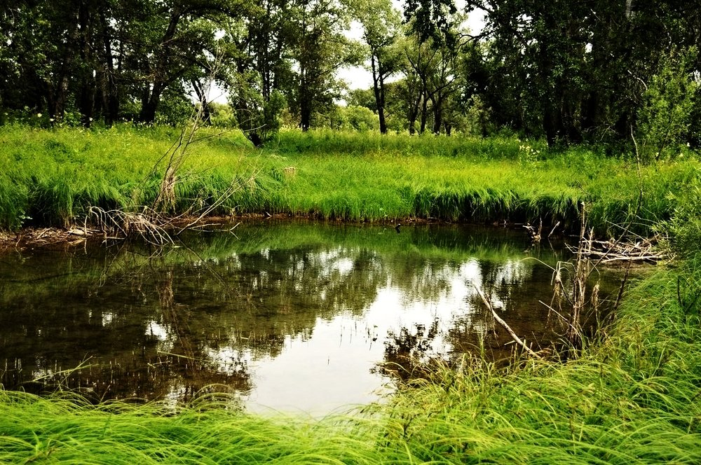 pond_in_the_woods.jpg
